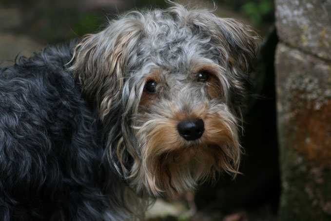 Giving This To Your Yorkie Daily Could Help Alleviate Painful Skin Allergies