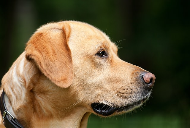 6 Of The Most Low Maintenance Dog Breeds