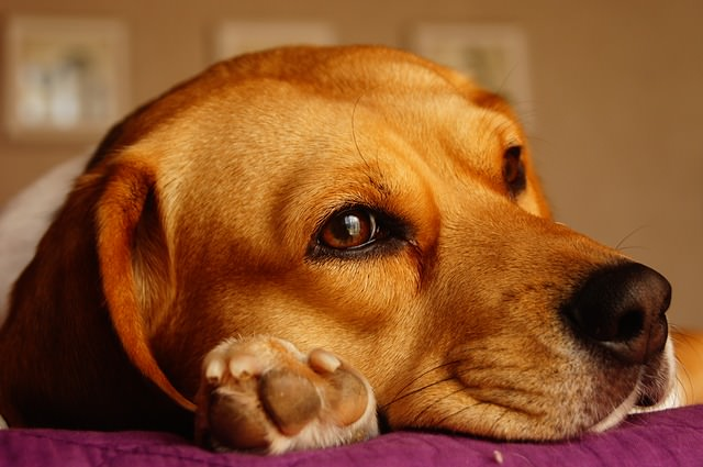 10 Dog Breeds That Are Incredibly Stubborn