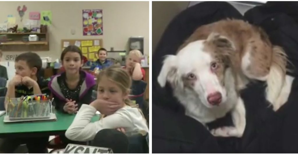 UPDATE: Second Graders Raise $450 In One Day For A Rescue Dog's Surgery