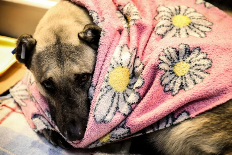 Istanbul Mall Opens Its Doors To Shelter Homeless Dogs During Snow Storm