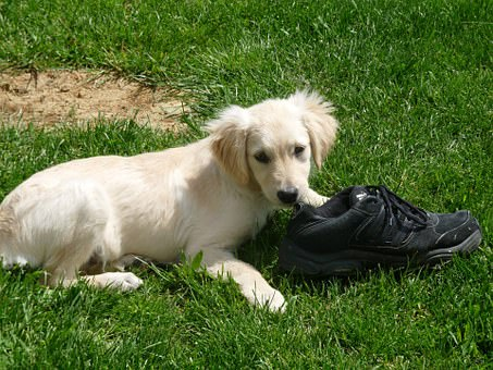 36c192f5781 The chewing of our shoes really impacts us maybe mostly because we not only  need our shoes to go outside