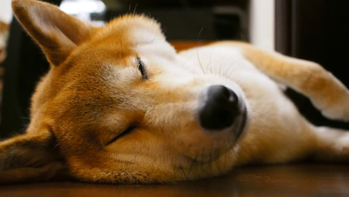 10 Natural Ways To Relieve Your Shiba Inu's Joint Pain