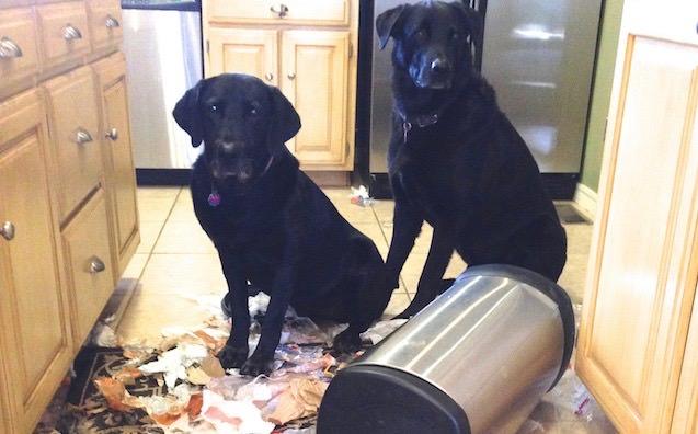 Dog Gone Pet Beds