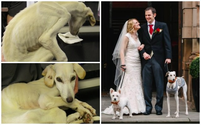 Dog Walks Down The Aisle With The Human Who Saved Him From Death's Door