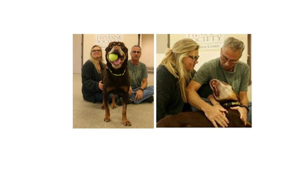 UPDATE: Baron The Disfigured Rottie Has Been Adopted!