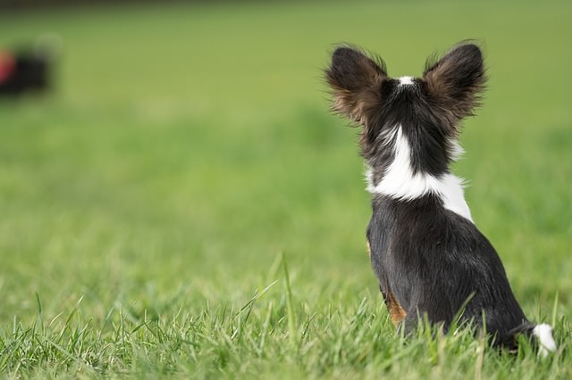 20 Dog Breeds That Are Predisposed To Ear Infections