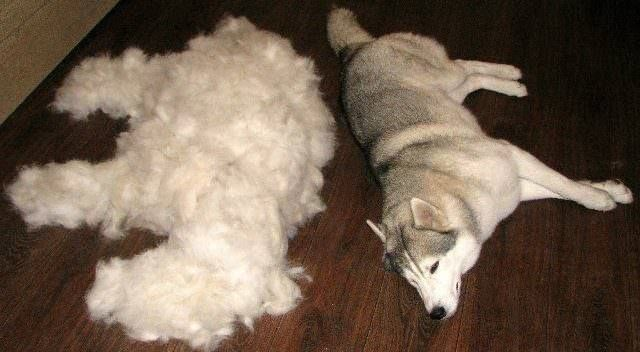 ways your excessively sheds to shedding stop real dog