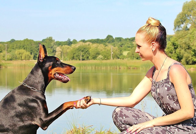 3 Great Ways To Strengthen Your Bond With Your Doberman