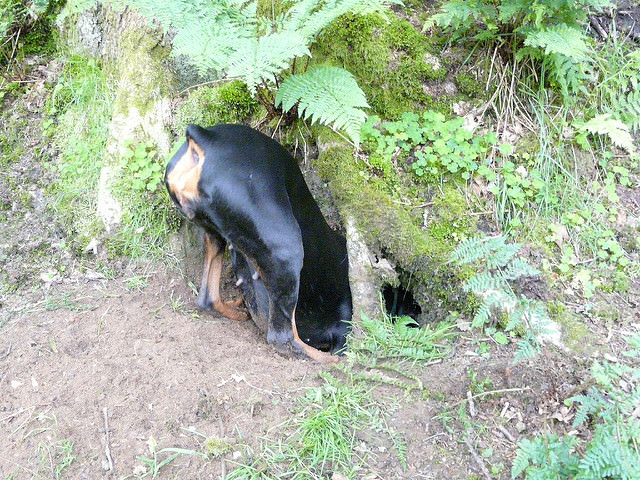 4 Tips to Stop Your Doberman From Digging