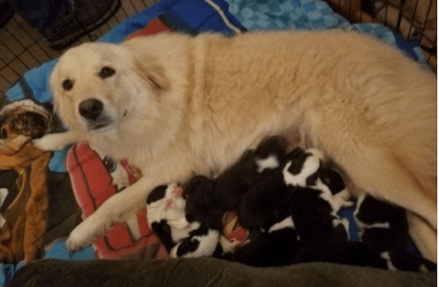Mama Dog Finds Joy Again After Losing Her Litter In A Fire