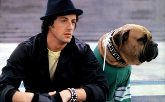 "Sly Stallone Posts Tribute To His Beloved Dog 41 Years After ""Rocky"""