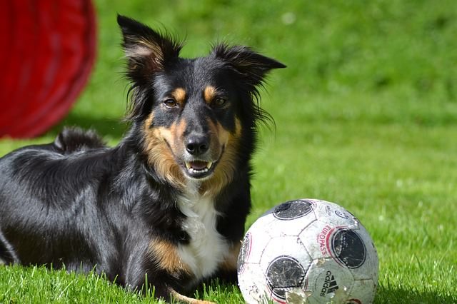 6 Solutions For Your Dog S Dry Coat Skin