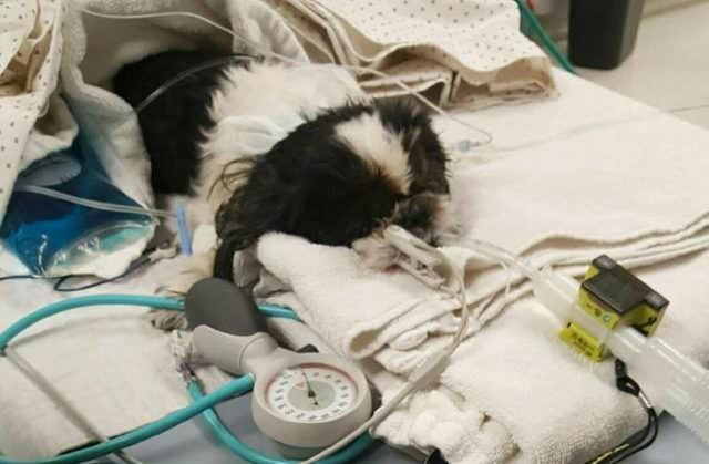 Vet Mistakenly Euthanizes Dog, But She Fights To Survive Against All Odds