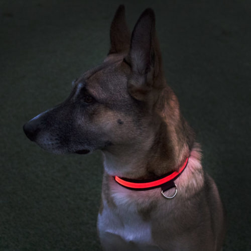 Red Rechargeable LED Dog Collar