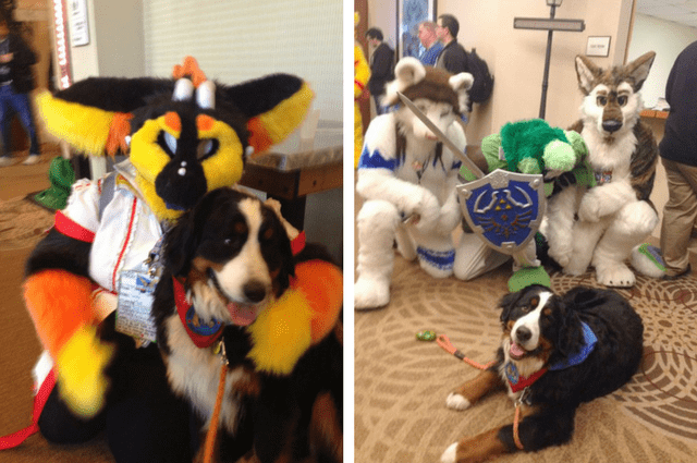 dog goes to fur con