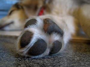 Ask A Vet: What Do I Do If I Cut My Dog\'s Nails Too Short?