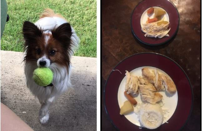 Adoring Dog Mom Makes A Mini-Plate For Her Pup Every Dinnertime