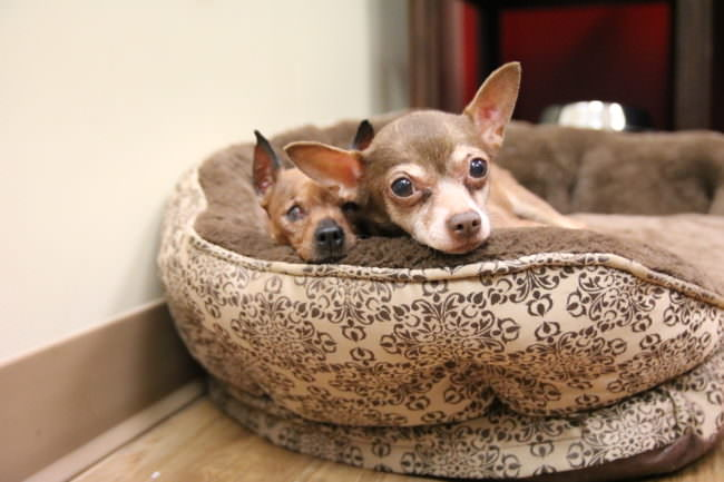 Bonded Senior Sisters Want To Live Out Their