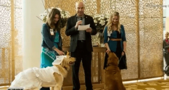 Therapy Dogs Tie The Knot At Children's Hospital