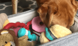 The Extremely-Essential Factor All Canine Mother and father Ought to Do With Their Pup's Toys