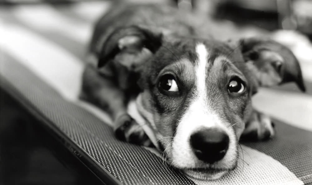 Natural Ways To Calm Anxious Dogs