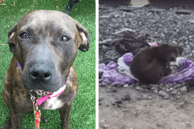 Loyal Dog Sat Vigil For Two Weeks Refusing To Leave Her Dead Friend's Side
