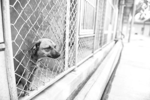 New Law Could Mean Tax Break For People Adopting From Shelters