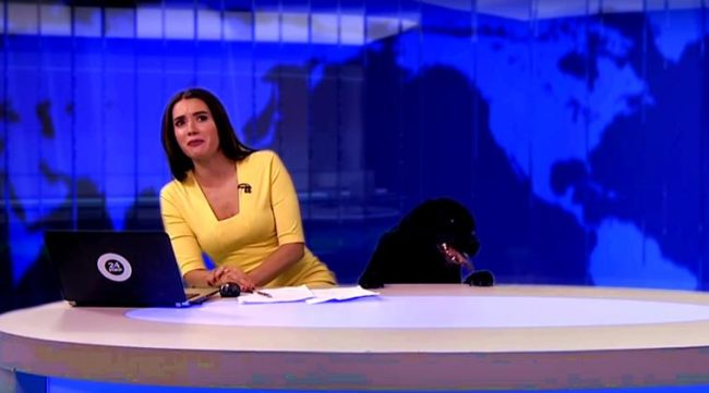 Ambitious Dog Crashes Live Newscast For 15 Seconds Of Fame