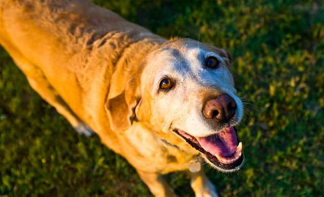 Is your dog aging too fast?