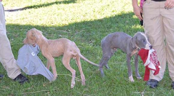 Puppies Rescued From Hellish Neglect Heal Body Soul