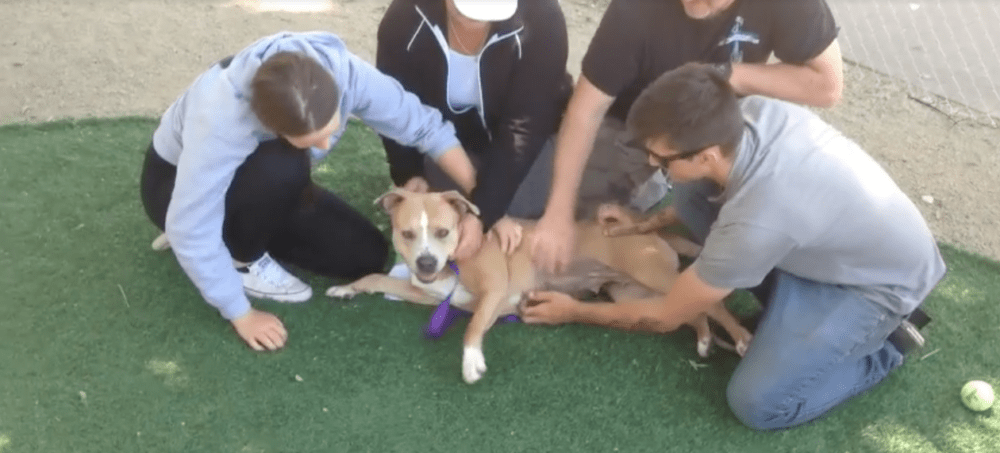 Family Finds Out Shelter Is Full & Drives 16 Hours To Adopt Dog