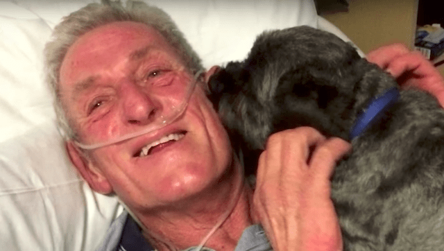 Dog Is Credited With Miraculously Rousing His Human From A Coma