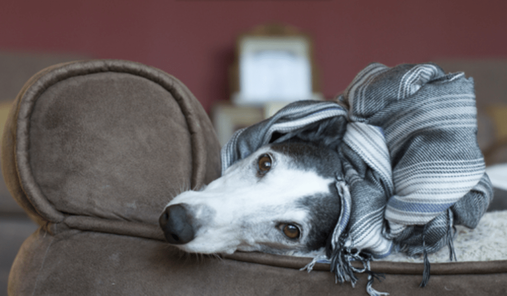 The 10 Dog Breeds That Enjoy Cuddling The Most