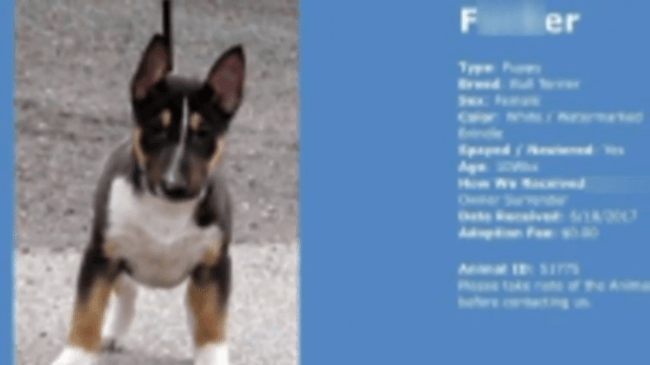 Offensive Fake Dog Profile Appears On Rescue Group's Website