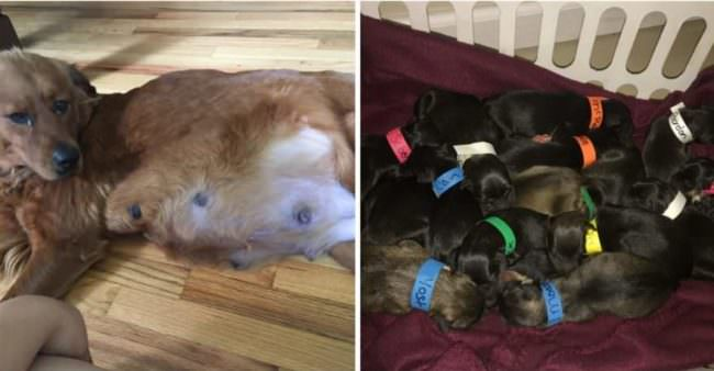 Mama Dog Rescued From Death Row Gives Birth To 18 Puppies