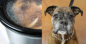 Why Bone Broth is The Final Superfood For Senior Canine