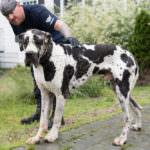 Good Dog Food At Petsmart For Great Danes