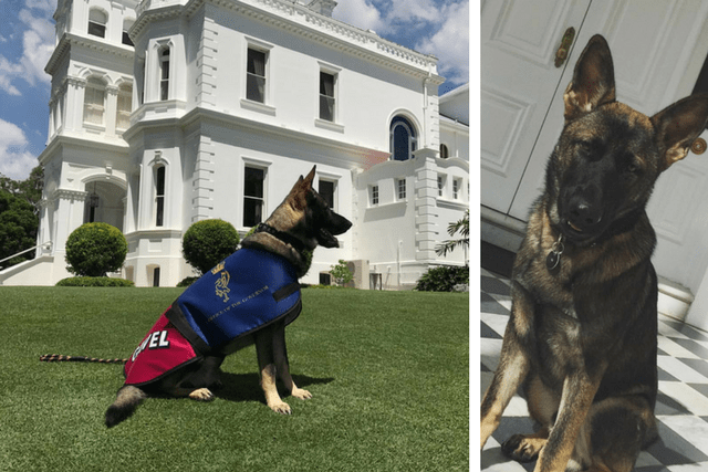 This Puppy Flunked Out Of The  Police Force, But Now He Has The Best New Job