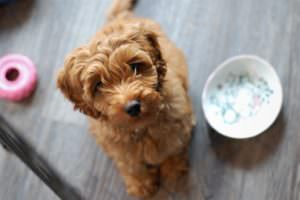 Feed your dog bone broth