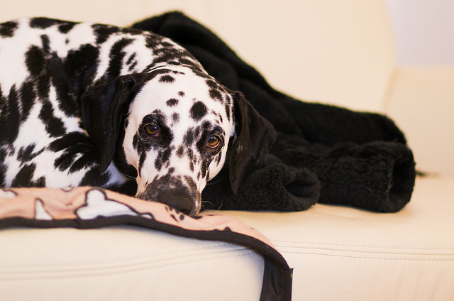 7 Tips Amp Tricks For Managing That Funky Dog Smell