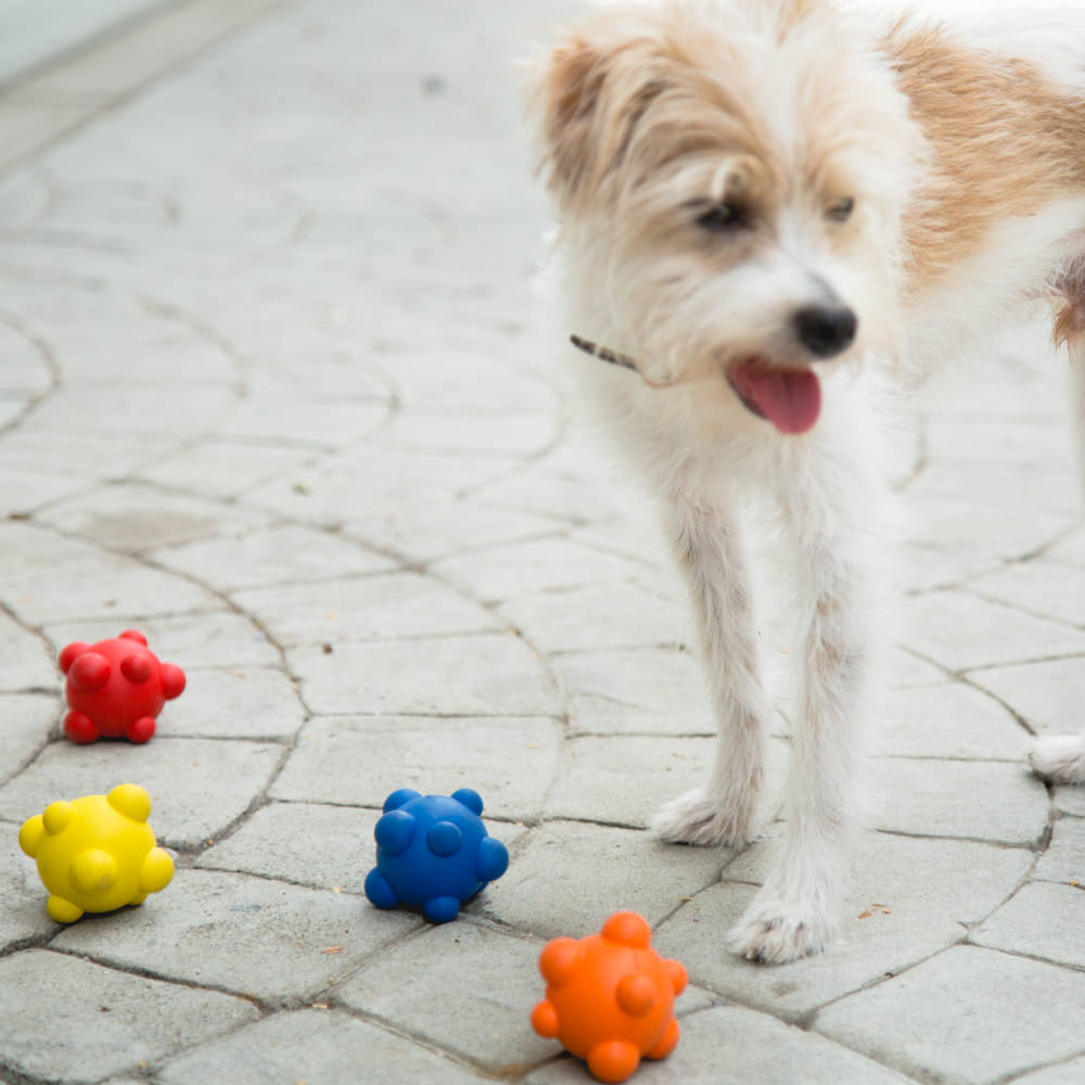 PAWtomic™ Unpredictable Bouncing Ball by Project Play™