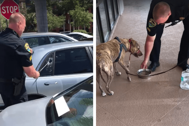 Police Smash Car Window To Save Dog From 100 + Degree Heat