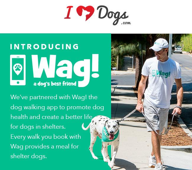 Wag Dog Walking Service