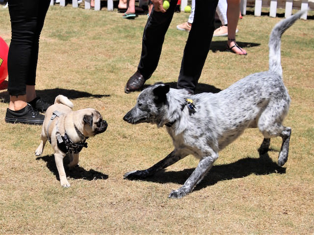 10 Tips To Help Your Exuberant Dog Interact With Other Pups