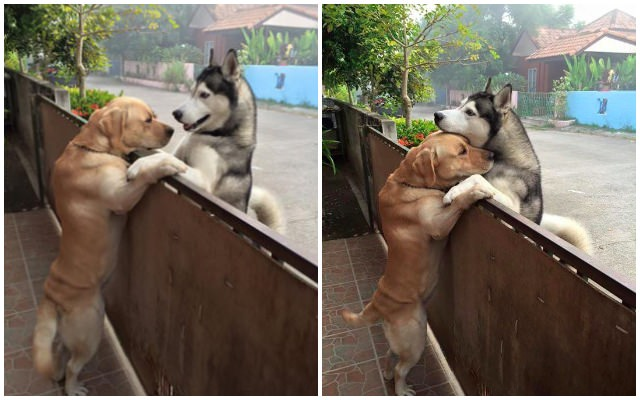 Dog Escapes Yard, Runs Straight To His Best Friend For A Hug