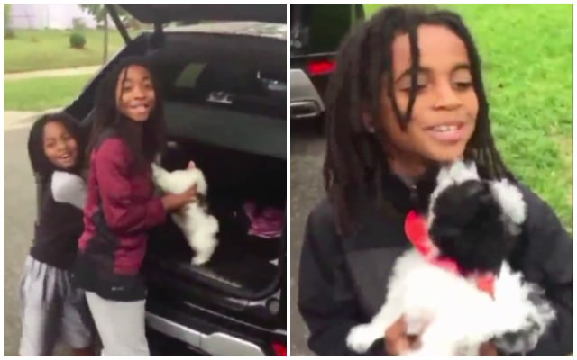 Stolen Puppy Is Reunited With Family After Thief Tries Selling Her On Facebook