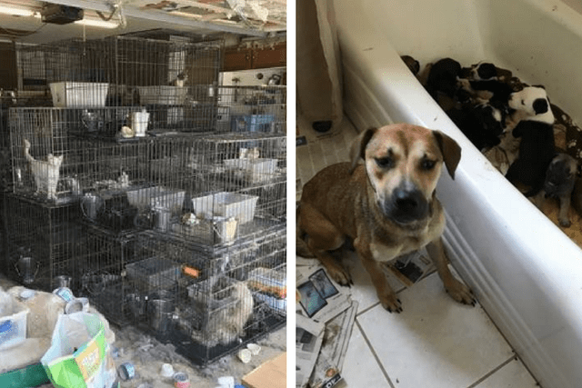 Animal Hoarding Case Leads To The Rescue Of 111 Dogs And Cats