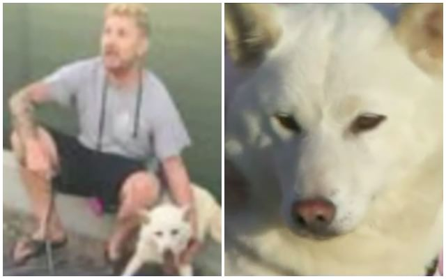 Stranger Saves Lost Dog From A Pack Of Aggressive Coyotes