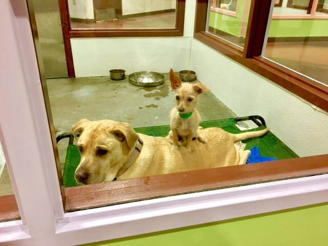 Unlikely Bonded Pair Who Refuse To Be Separated Find Their Forever Home Together